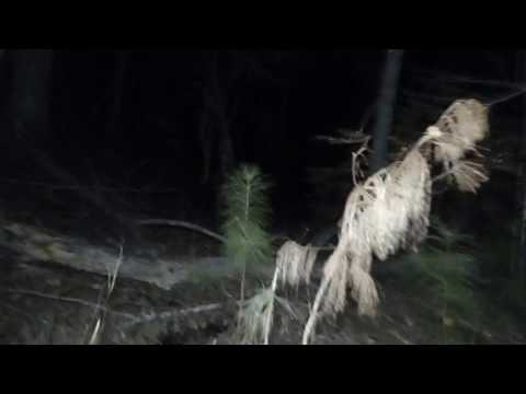 Alabama Bigfoot Freaked out and a stopped hunt.