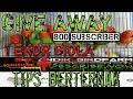 Give Away  Ekor Biola Green Tips Berternak Andikbirdfarm  Mp3 - Mp4 Download