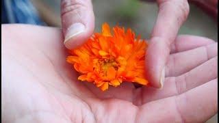 Смотрите в субботу: съедобные цветы, растворимый кофе и 5 фактов об оливках и маслинах