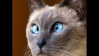 Кошачьи приколы! ТОП подборка приколов со смешными кошками