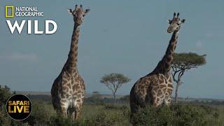 Safari Live - Day 303   Nat Geo Wild