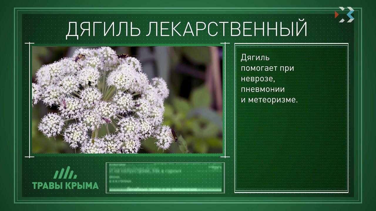 показує лекарственные травы крыма фото и описание зависимости того