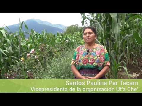 Experiencias de gobernanza de tierras comunales en Guatemala. Chuamazán y Baquiax, Totonicapán