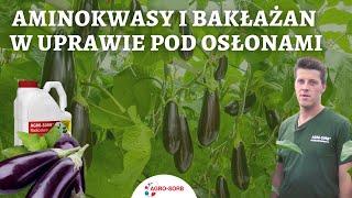 Aminokwasy i bakłażan w uprawie pod osłonami- AgroSorb Radiculum - PolskieAminokwasy.pl