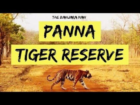 Panna Tiger Reserve - पन्ना टाइगर रिजर्व, मध्य प्रदेश (National Park) नेशनल पार्क