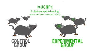 UMMS scientists develop technology to give night vision to mammals
