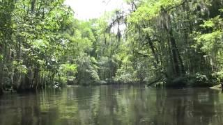 Carolina Rivers: Lumber River Vignette