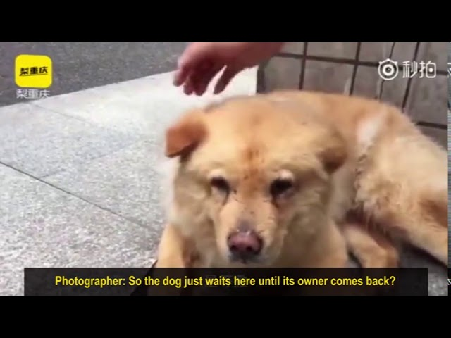 A touching dog's tale in China