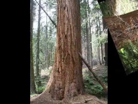 Estate 2010 - USA 3 - Sequoia & Kings Canyon National Parks