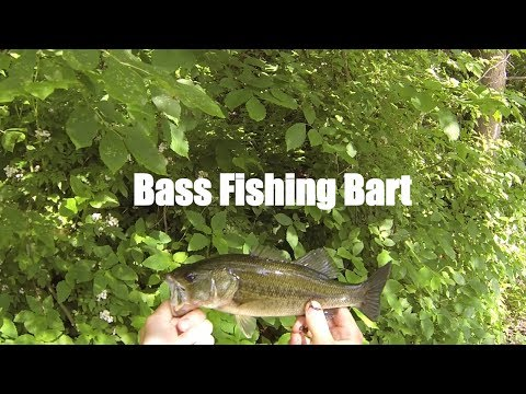Topwater bass fishing with Bart