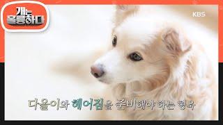 다올이와 헤어짐을 준비해야 하는 강훈련사.. [개는 훌륭하다/Dogs Are Incredible] 20200406
