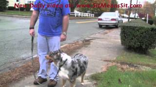 Dog Aggression Problems?  Call Sit Means Sit Dog Training!