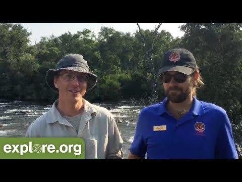 Brown Bear Fishing Skills - Live Chat