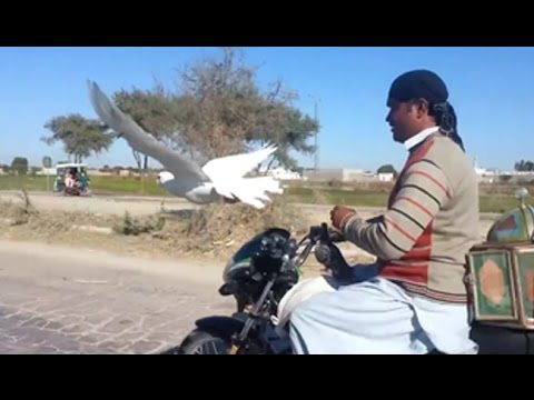 Amazing Race | Dove vs Bike | The Man Vs Bird