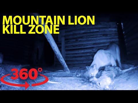 Incredible rare glimpse inside a mountain lion 'kill hut' at night in VR
