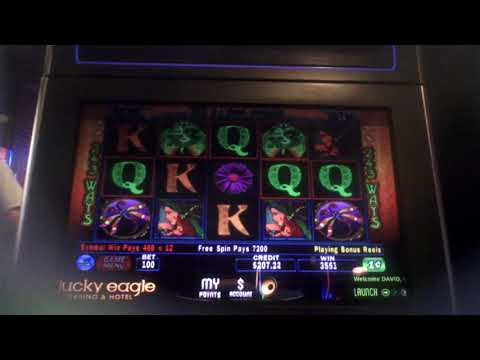 Dragon Fly Slot Machine NICE WIN Bonus