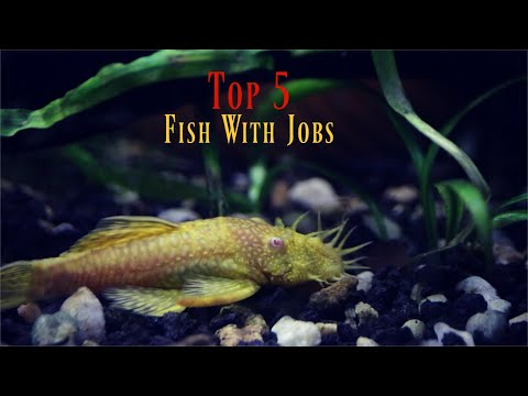 Top 5 Most USEFUL Aquarium Fish