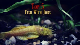 Top 5 Most USEFUL Aquarium Fish