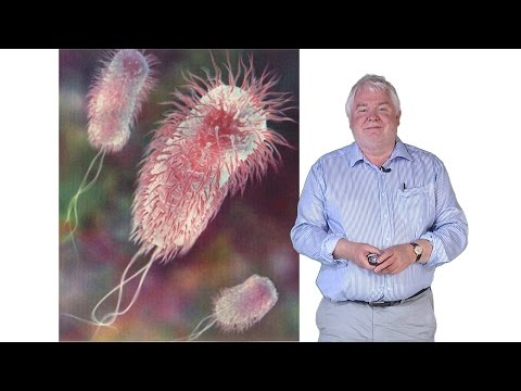 Synthetic Biology: Synthetic Biology and Escherichia coli - Steve Busby