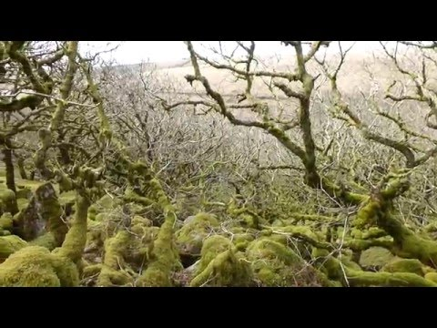 Views of Wistman's Wood, Dartmoor