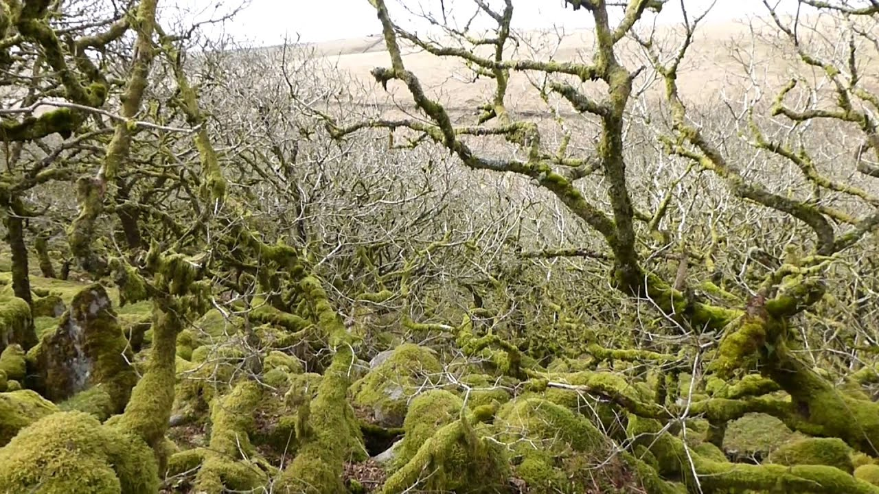 Image result for Wistman's Wood Dartmoor youtube
