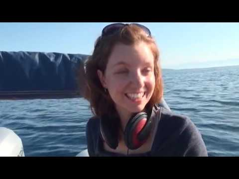 Bottlenose Dolphin Volunteer Project In Croatia