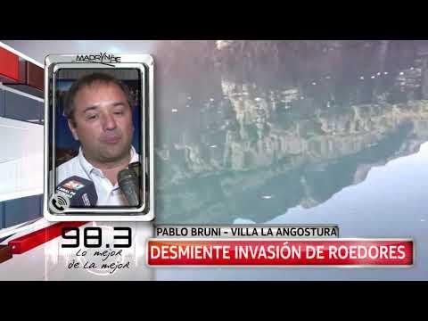 Invasión de ratas en La Angostura