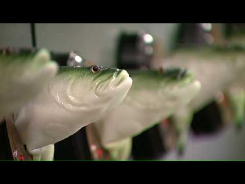 Bar Installs 70+ Big Mouth Billy Bass Fish To Sing Popular Songs