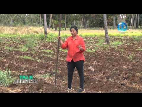 YAM FARMING - TONGA
