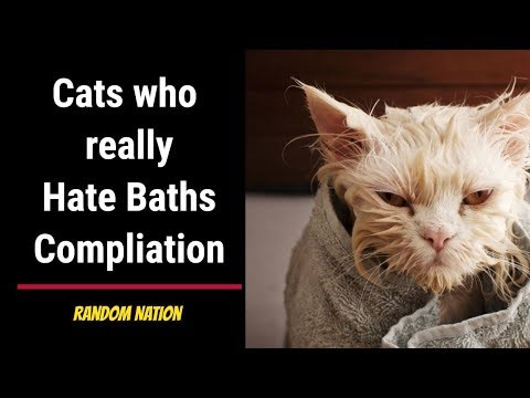 Cats who really hate baths Compliation