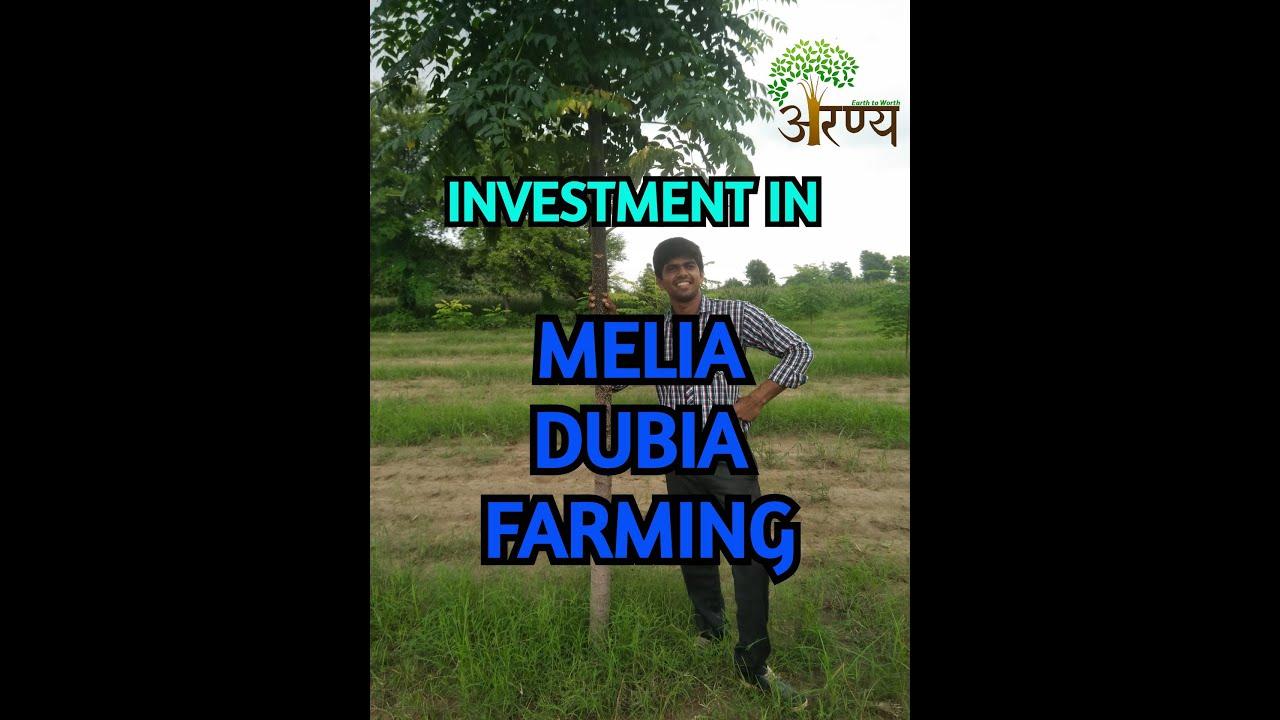 EXPENSE IN MALABAR NEEM FARMING / INVESTMENT IN MELIA DUBIA FARMING / ARANYA NATURE FARM