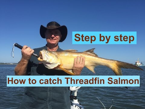 Fishing For Threadfin And Jew (step By Step Rigs And Gear)