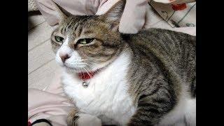 流し目猫ちゃんが愛おしくてかわいい♡~Leer cat. 超絶セクシーですw ...