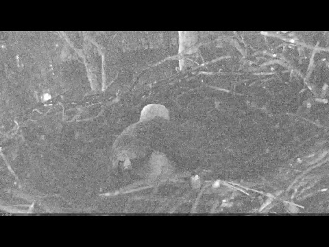 EAGLE CAM 2017 - Earth Conservation Corps, MPDC - Washington, DC - #EggWatch2017