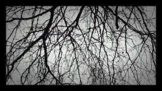 Often A Bird Wim Mertens Piano Mit Fotos