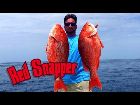 Epic Red Snapper Fishing | Red Snapper Mini Season Port Canaveral Florida