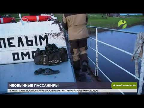 В соцсетях появилось видео атаки насекомых на судно в Свердловской области