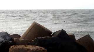 SOCIALITÉ.- Delfines en el mar de Coatzacoalcos.
