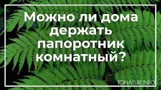 Можно ли дома держать папоротник комнатный? | toNature.Info