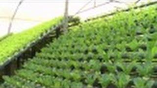 Cultivo Hidropónico - Tv Agro Por Juan Gonzalo Angel