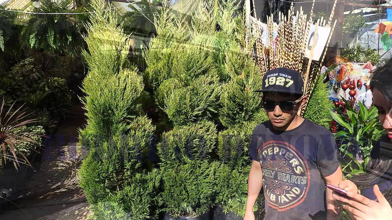 Visita Al Mercado De Flores Y Plantas De Cuemanco Youtube