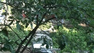 Благоустройство и озеленение по-химкински(, 2011-06-29T04:45:24.000Z)