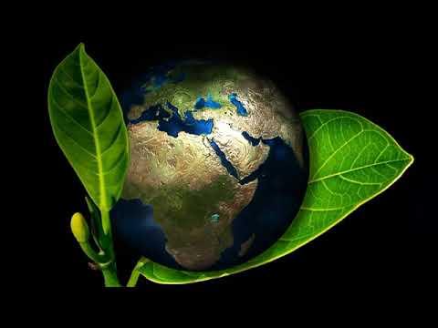 ООН: Земля вступила в шестую эру массового вымирания