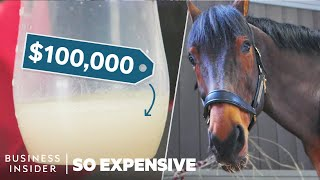 Why Horse Semen Is The World's Most Expensive Liquid | So Expensive