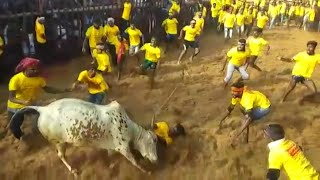 jallikattu-kick-starts-in-tamil-nadu-with-stricter-norms