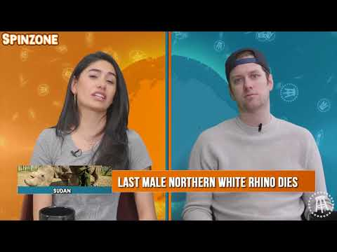 The Spin Zone: Ben Affleck Is Disgusting And The Backstreet Boys Are Not