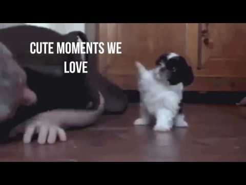 Cute moments from our cats and dogs
