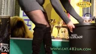 Выставка собак, Харьков, 30 октября 2016, видео 12