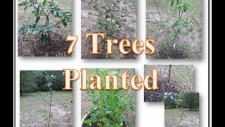 7 trees in the ground - Yahoo!!! Our food forest is started