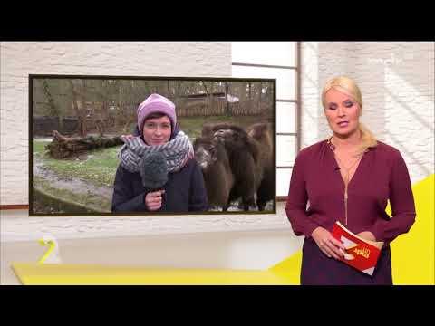 Youtube Kacke: Orkan Frederik | KoK24